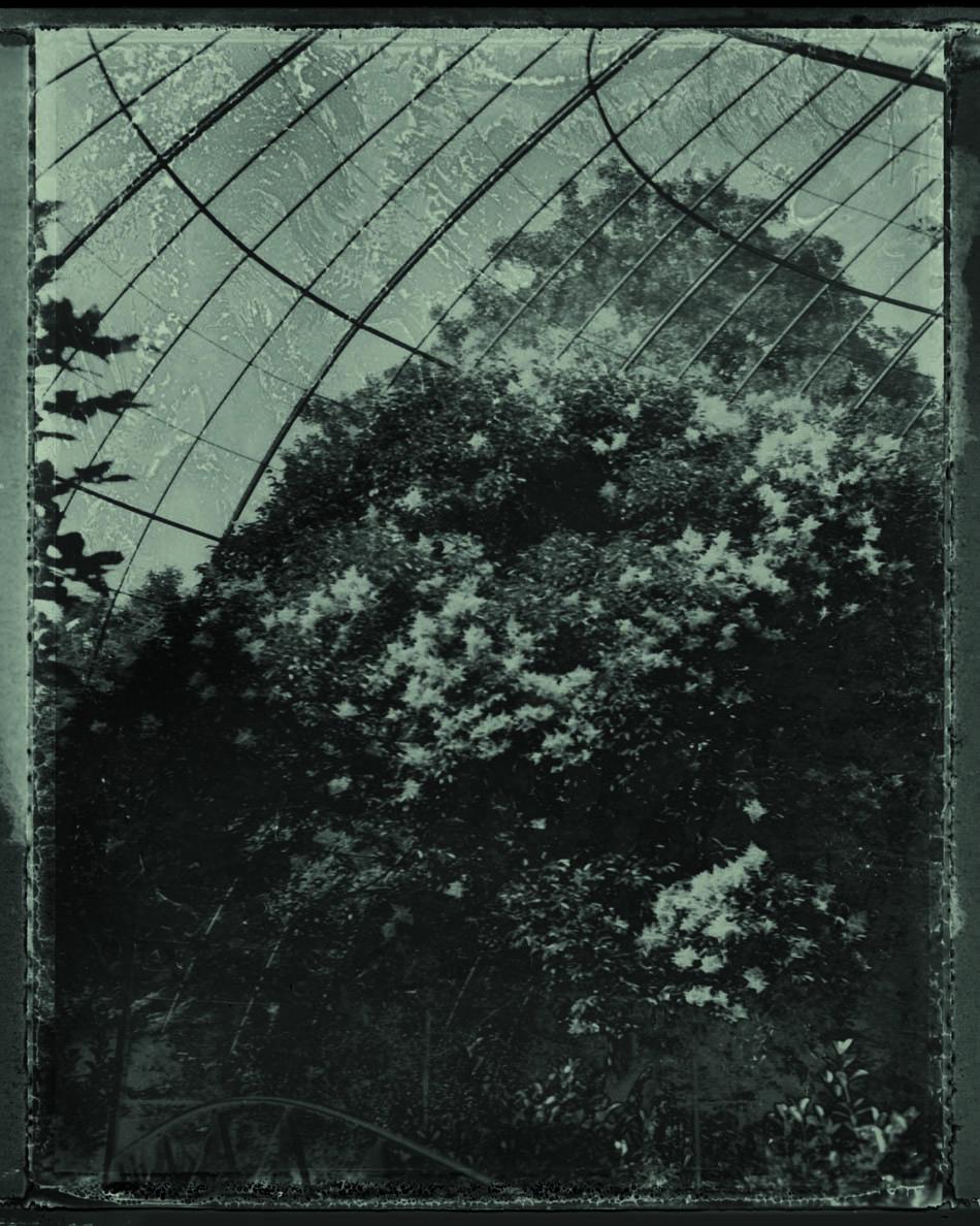 l'arbre en cage_2013 Sarah Moon